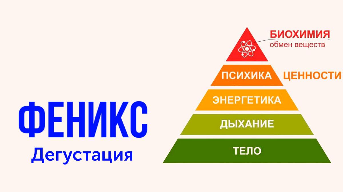 феникс дегустация шолохов